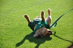 Dog Day 2010 #1